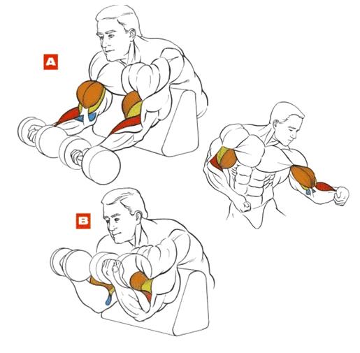 Упражнения чтобы прокачать нижнюю часть руки