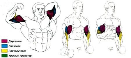 Упражнение молот