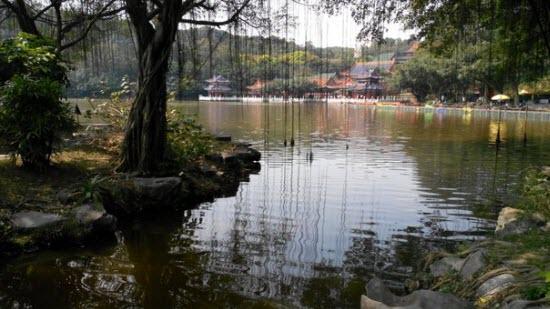 Дерево и озеро