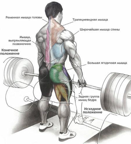Какие мышцы работают настановой тяге