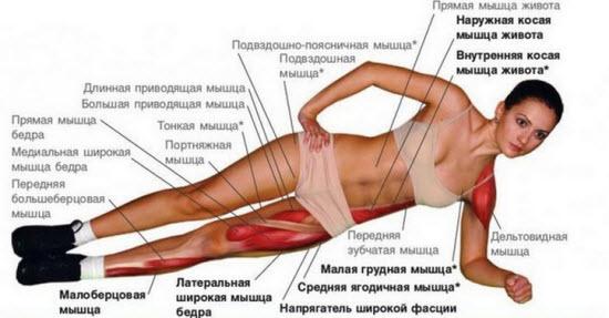 Какие работают мышцы