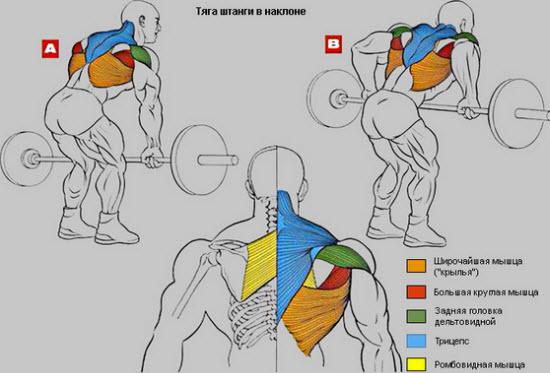 Какие мышцы работают при тяге в наклоне