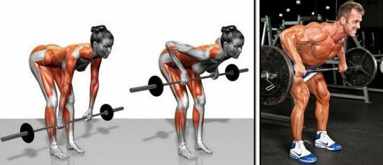 Работа мышц спины