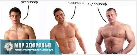 Три типа телосложения
