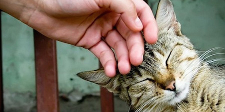 гладить кота