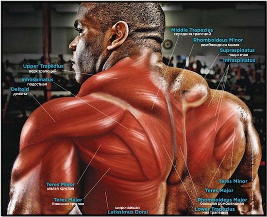 спина и мышцы