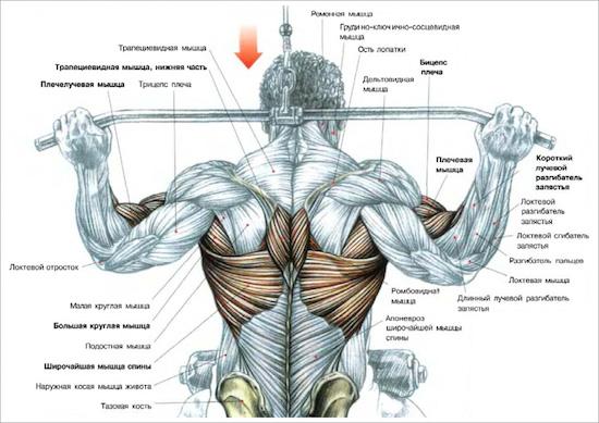 тяга блока за шею анатомия