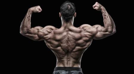 огромная спина