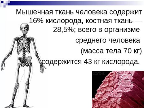 Кислород в мышцах